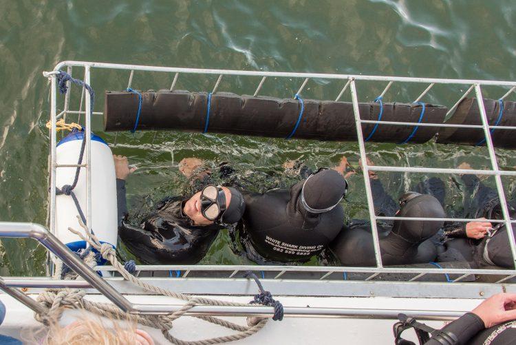 Hai-Käfigtauchen als unvergessliches Erlebnis.