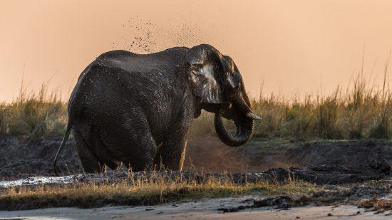 Elephant spraying water