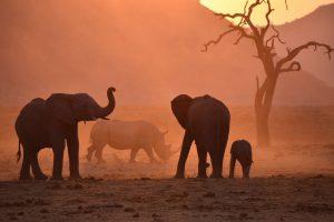 Elephants in dusty sunset