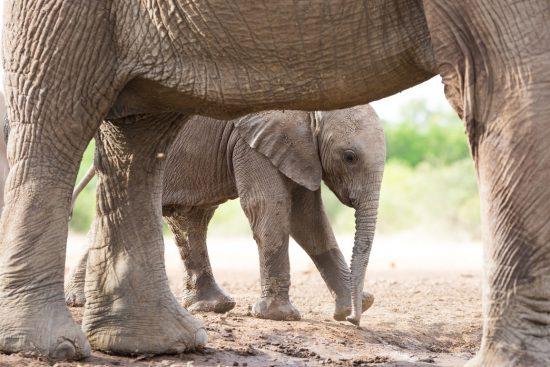 Cute elephant baby