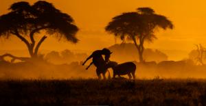 Wildtiere vor dem Sonnenuntergang in Afrika