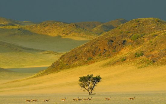 Springboks in Namibia standing in a row with a beautiful backdrio