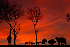Silhouettes of African animals against a beautiful sunset